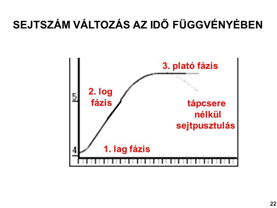SEJTSZÁM VÁLTOZÁS AZ IDŐ FÜGGVÉNYÉBEN 1. lag fázis 2. log fázis 3. plató fázis tápcsere nélkül sejtpusztulás 22