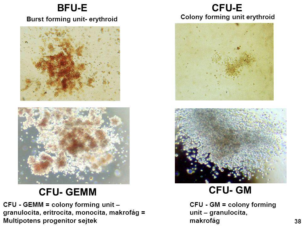 CFU-EBFU-E Burst forming unit- erythroid Colony forming unit erythroid 38 CFU- GEMM CFU - GEMM = colony forming unit – granulocita, eritrocita, monoci