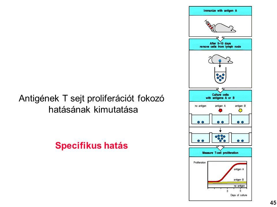 Antigének T sejt proliferációt fokozó hatásának kimutatása Specifikus hatás 45