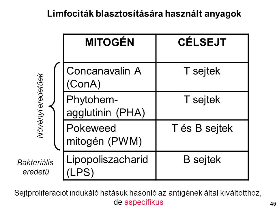MITOGÉNCÉLSEJT Concanavalin A (ConA) T sejtek Phytohem- agglutinin (PHA) T sejtek Pokeweed mitogén (PWM) T és B sejtek Lipopoliszacharid (LPS) B sejte