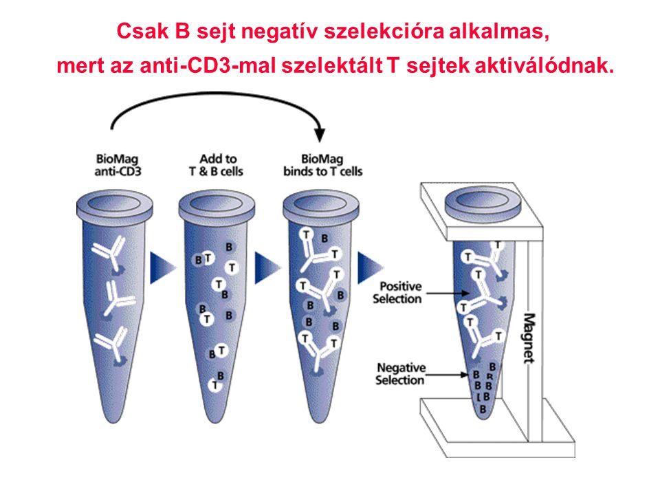 54 Csak B sejt negatív szelekcióra alkalmas, mert az anti-CD3-mal szelektált T sejtek aktiválódnak.