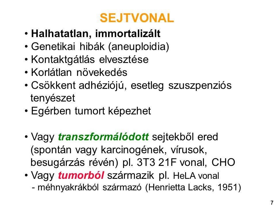SEJTVONAL Halhatatlan, immortalizált Genetikai hibák (aneuploidia) Kontaktgátlás elvesztése Korlátlan növekedés Csökkent adhéziójú, esetleg szuszpenzi