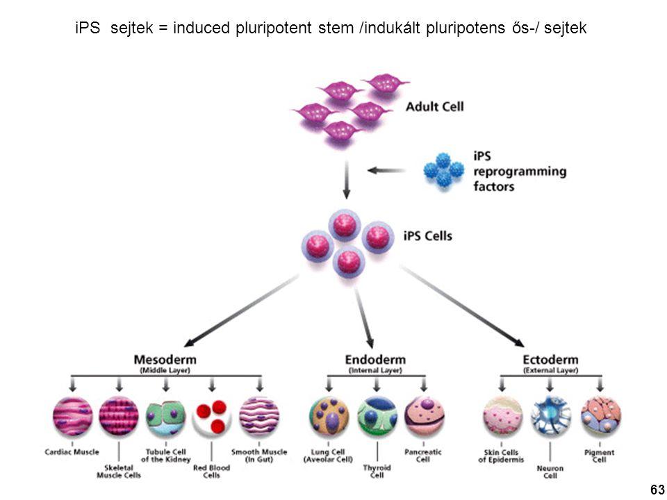 iPS sejtek = induced pluripotent stem /indukált pluripotens ős-/ sejtek 63