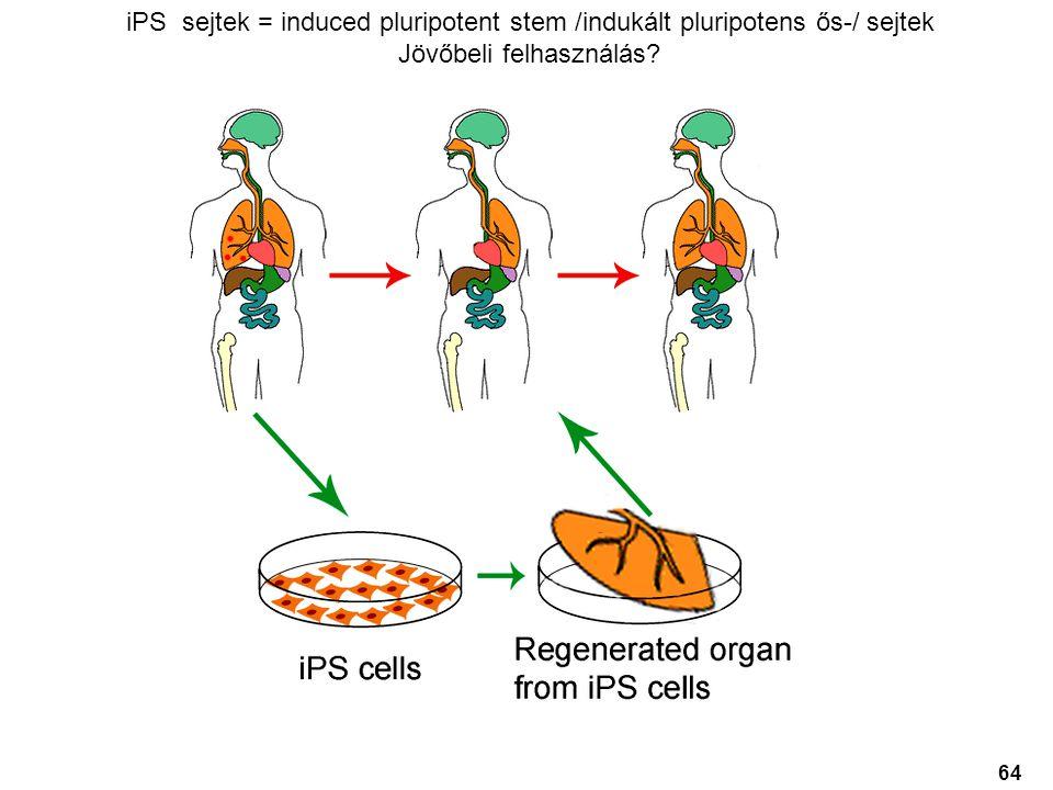 iPS sejtek = induced pluripotent stem /indukált pluripotens ős-/ sejtek Jövőbeli felhasználás? 64