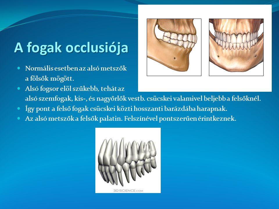 A fogak occlusiója Normális esetben az alsó metszők a fölsők mögött. Alsó fogsor elöl szűkebb, tehát az alsó szemfogak, kis-, és nagyőrlők vestb. csüc
