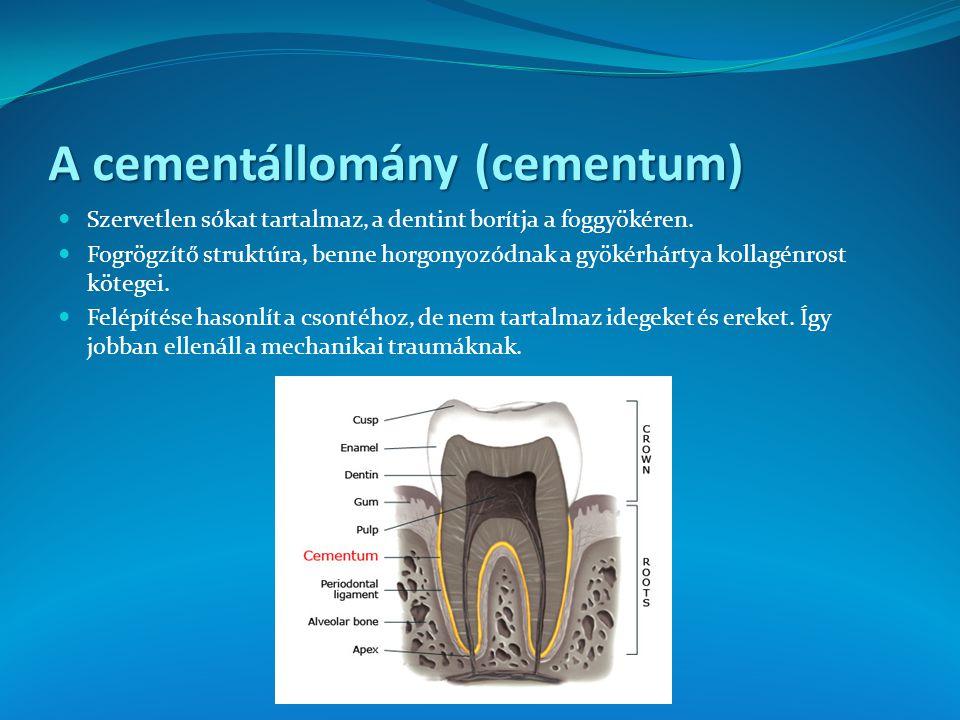 A cementállomány (cementum) Szervetlen sókat tartalmaz, a dentint borítja a foggyökéren. Fogrögzítő struktúra, benne horgonyozódnak a gyökérhártya kol