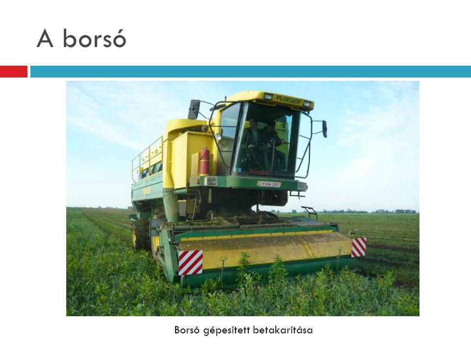 A borsó Borsó gépesített betakarítása