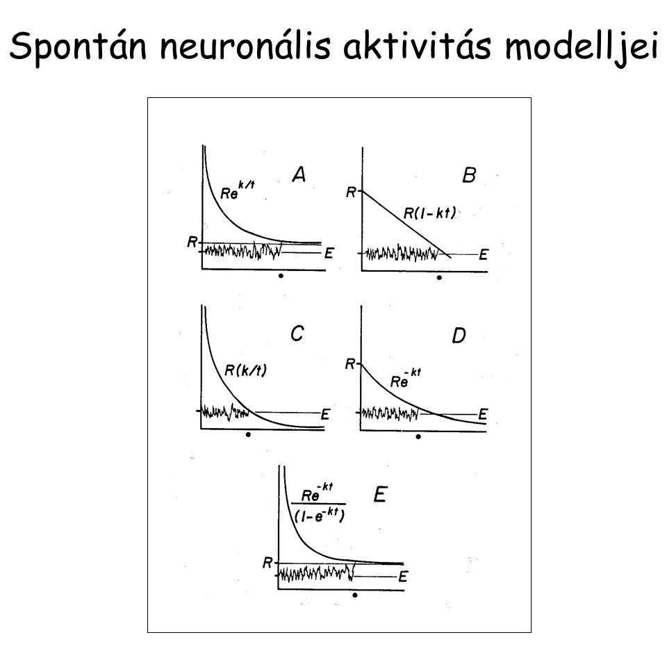 Spontán neuronális aktivitás modelljei