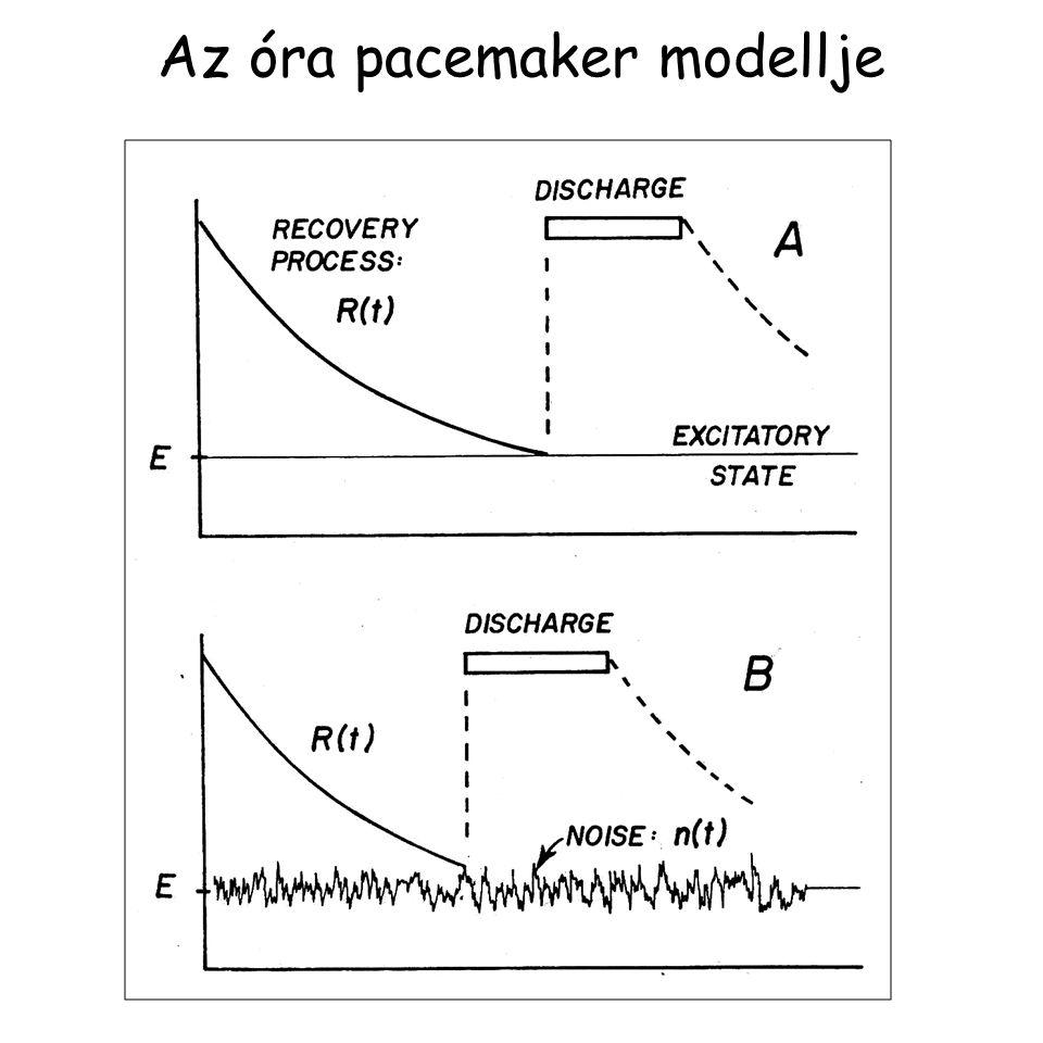 Az óra pacemaker modellje