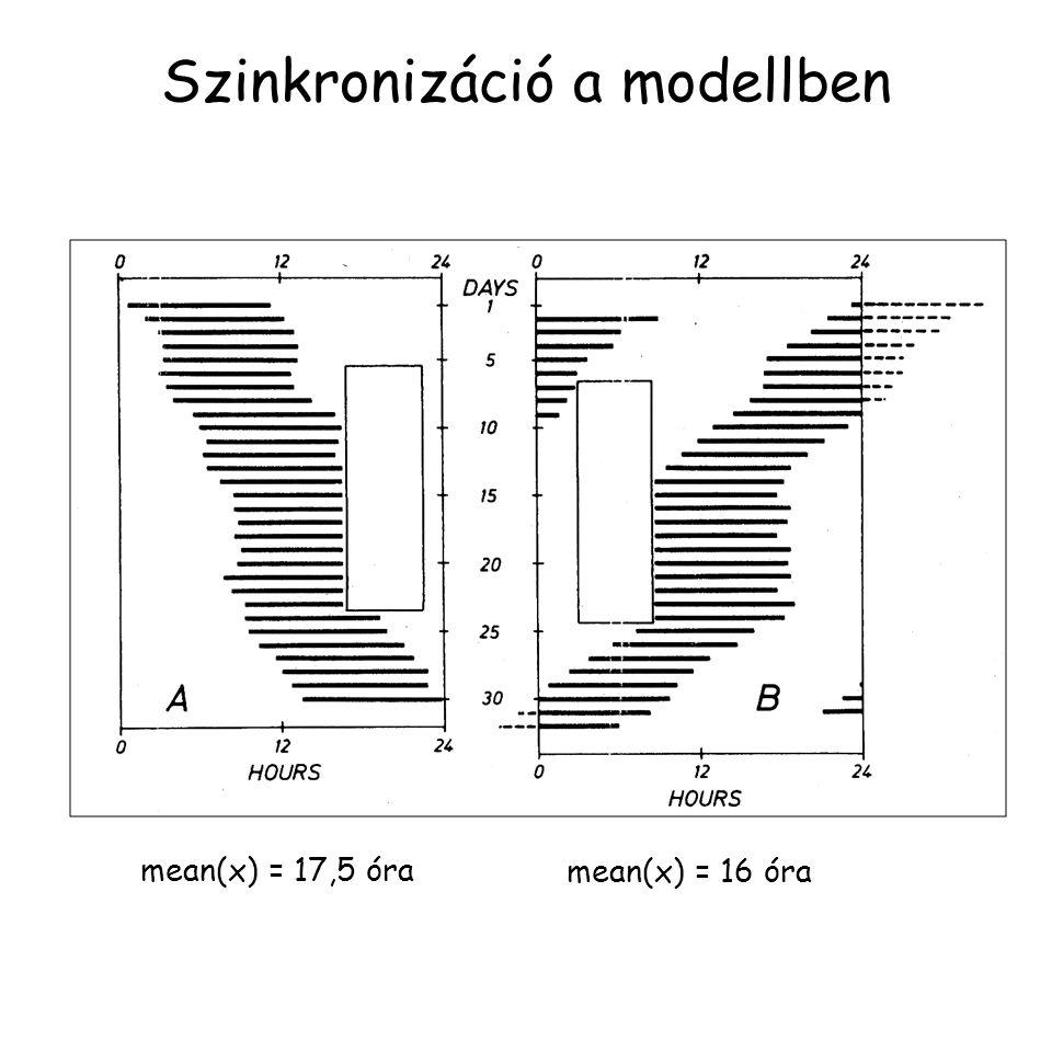 Szinkronizáció a modellben mean(x) = 17,5 óra mean(x) = 16 óra