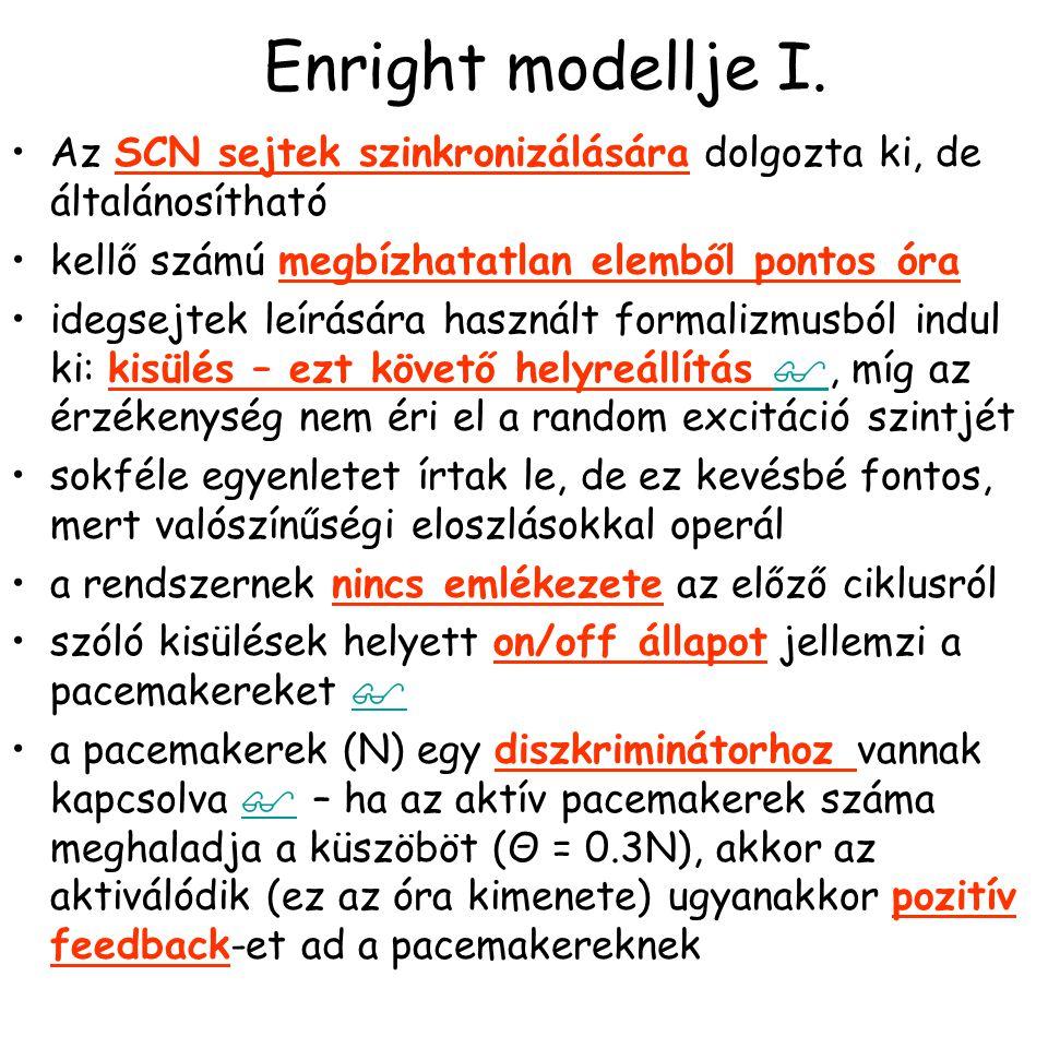 Enright modellje I.