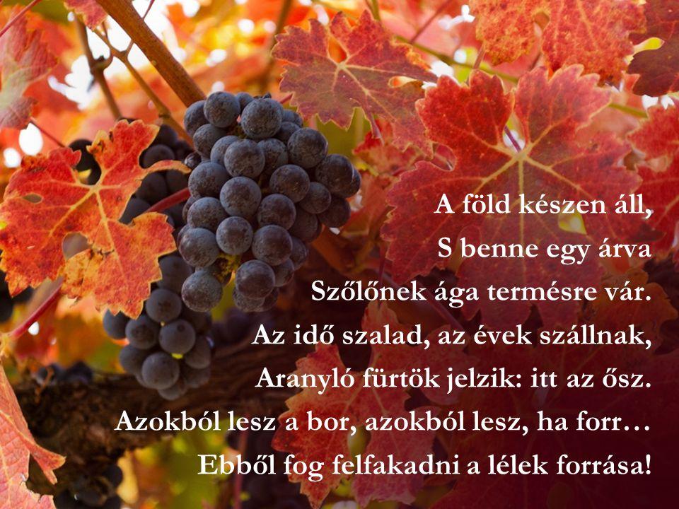 A föld készen áll, S benne egy árva Szőlőnek ága termésre vár. Az idő szalad, az évek szállnak, Aranyló fürtök jelzik: itt az ősz. Azokból lesz a bor,