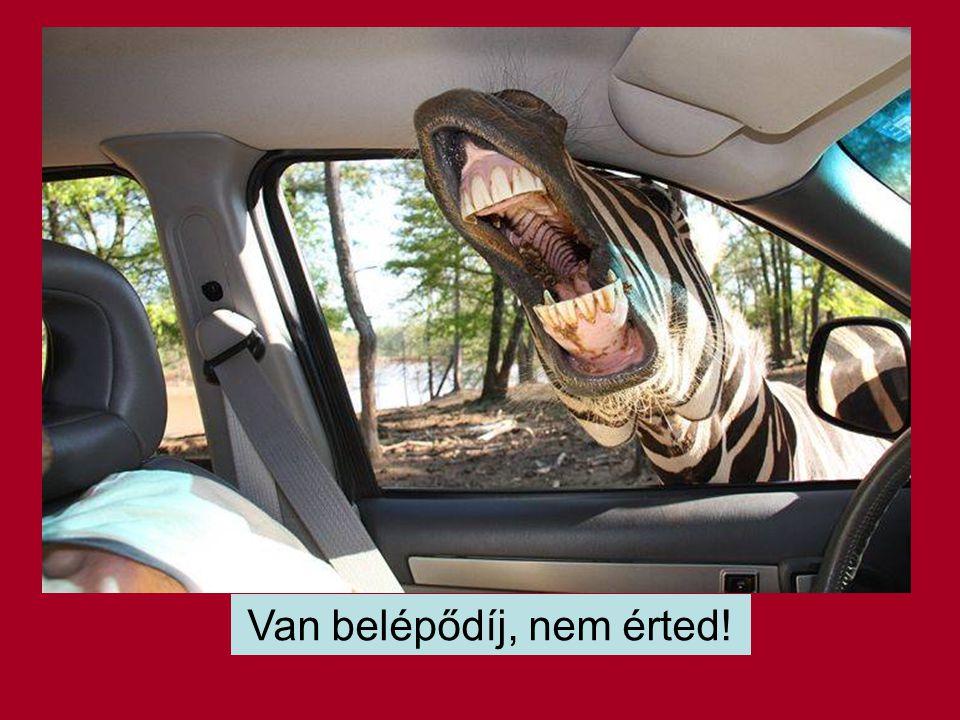 Balesetmentes vezetést !