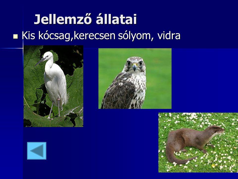 Jellemző állatai Jellemző állatai Kis kócsag,kerecsen sólyom, vidra Kis kócsag,kerecsen sólyom, vidra