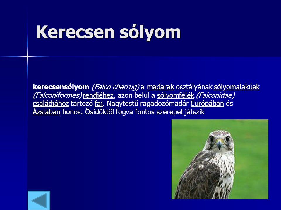 Kerecsen sólyom kerecsensólyom (Falco cherrug) a madarak osztályának sólyomalakúak (Falconiformes) rendjéhez, azon belül a sólyomfélék (Falconidae) cs
