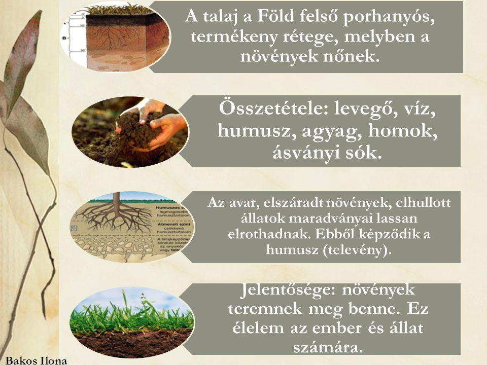 A talaj a Föld felső porhanyós, termékeny rétege, melyben a növények nőnek.