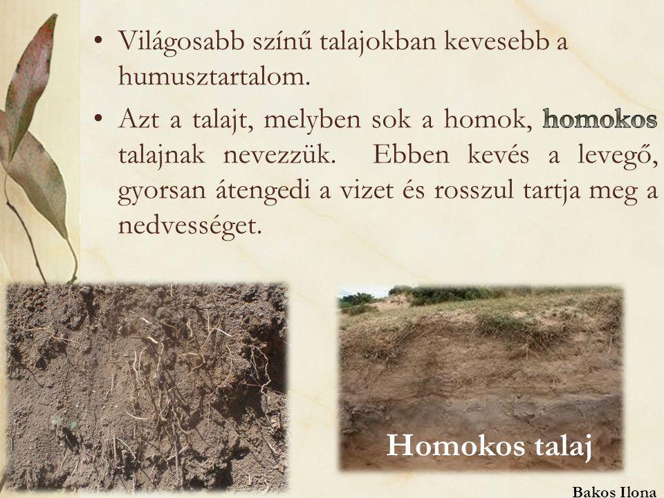 Homokos talaj Bakos Ilona