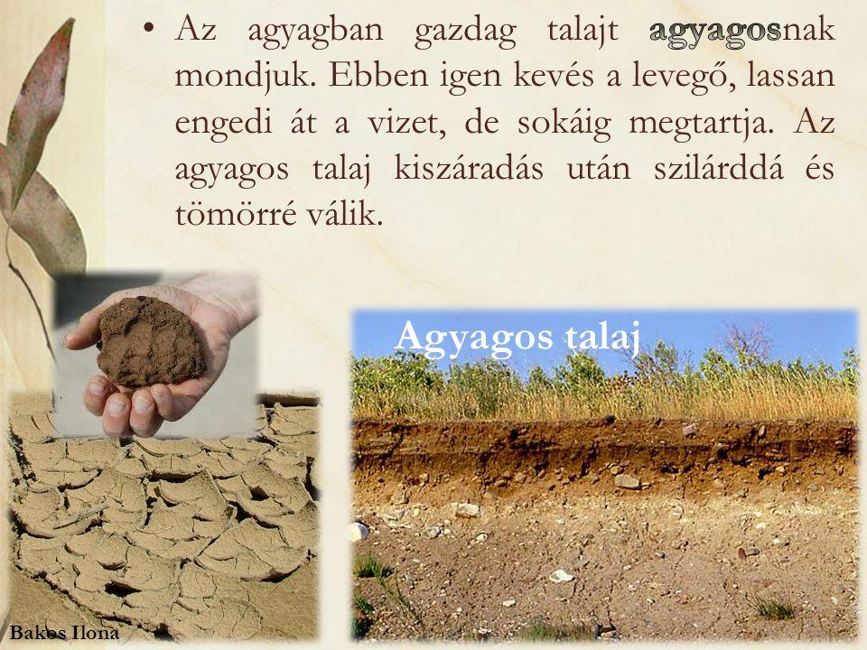 Agyagos talaj Bakos Ilona