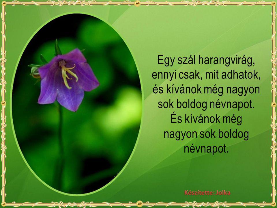 Egy szál harangvirág, ennyi csak, mit adhatok, és kívánok még nagyon sok boldog névnapot.