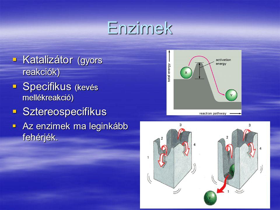 Enzimek  Katalizátor (gyors reakciók)  Specifikus (kevés mellékreakció)  Sztereospecifikus  Az enzimek ma leginkább fehérjék.