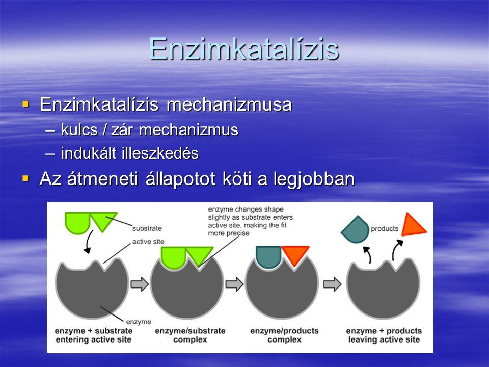Enzimkatalízis  Enzimkatalízis mechanizmusa –kulcs / zár mechanizmus –indukált illeszkedés  Az átmeneti állapotot köti a legjobban