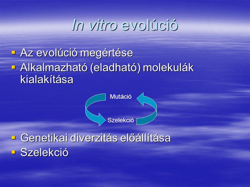  Az evolúció megértése  Alkalmazható (eladható) molekulák kialakítása  Genetikai diverzitás előállítása  Szelekció Mutáció Szelekció