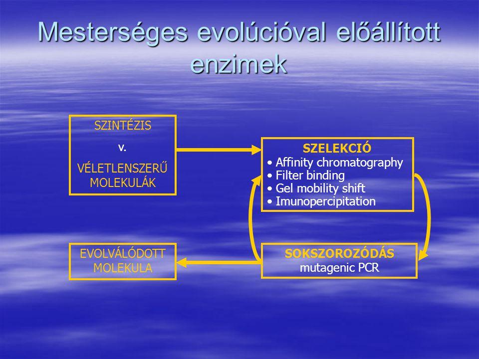 Mesterséges evolúcióval előállított enzimek SZINTÉZIS v. VÉLETLENSZERŰ MOLEKULÁK SZELEKCIÓ Affinity chromatography Filter binding Gel mobility shift I