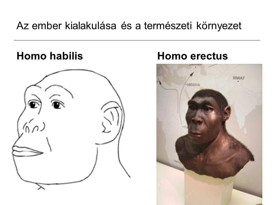 Az ember kialakulása és a természeti környezet Homo habilis Homo erectus
