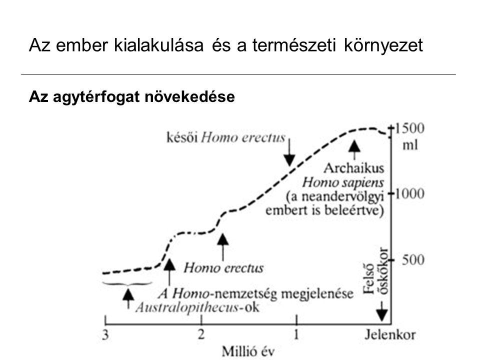 Az ember kialakulása és a természeti környezet Az agytérfogat növekedése
