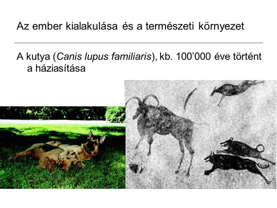 Az ember kialakulása és a természeti környezet A kutya (Canis lupus familiaris), kb.