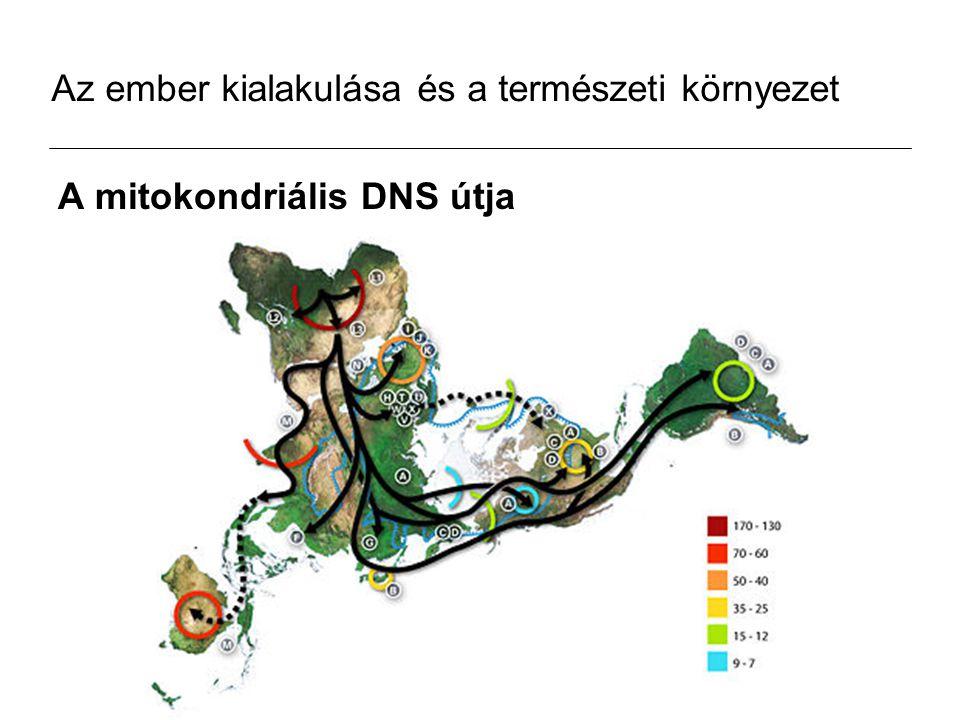 Az ember kialakulása és a természeti környezet A mitokondriális DNS útja