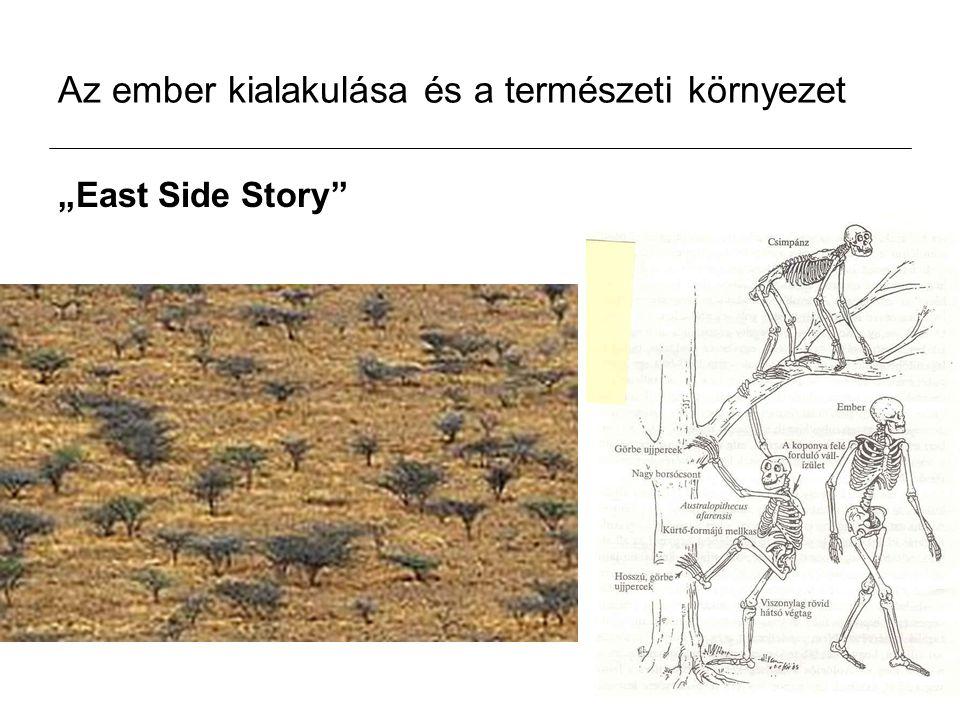 """Az ember kialakulása és a természeti környezet """"East Side Story"""