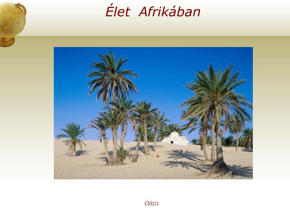 Élet Afrikában Oázis