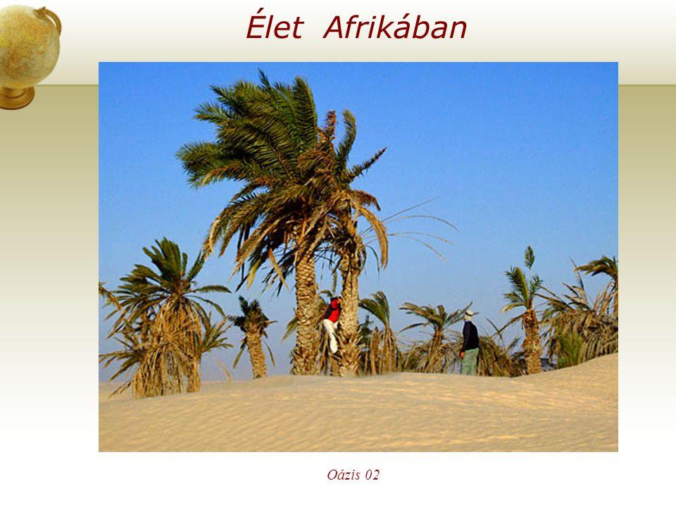 Élet Afrikában Oázis 02