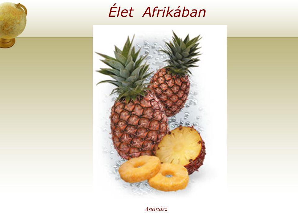 Élet Afrikában Ananász