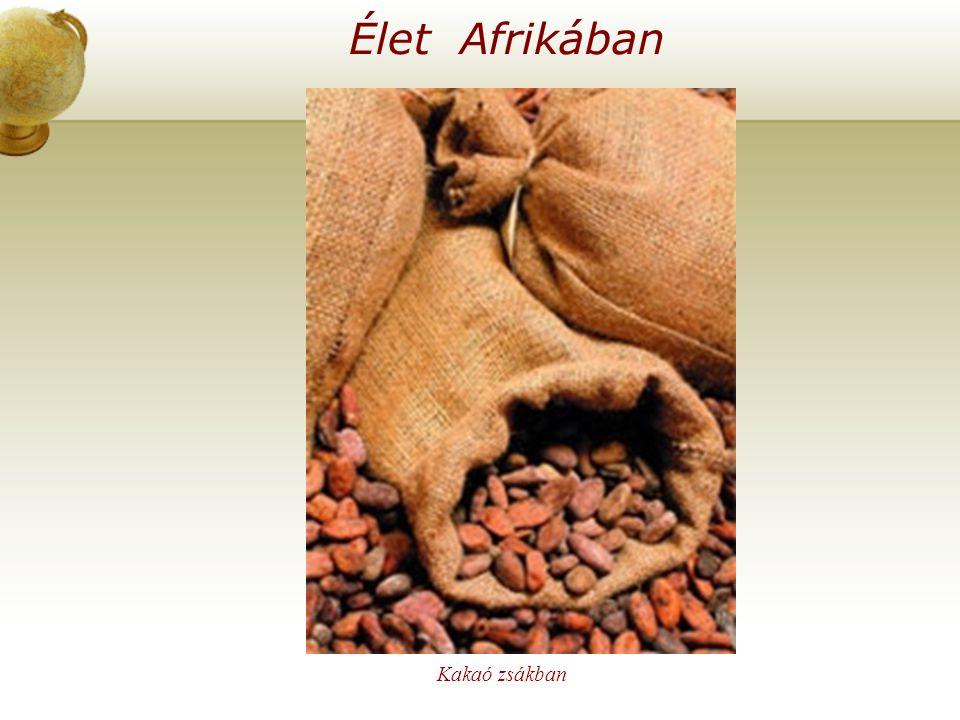 Élet Afrikában Kakaó zsákban