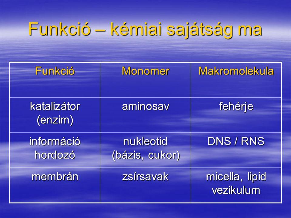 Funkció – kémiai sajátság ma FunkcióMonomer Makromolekula katalizátor (enzim) aminosav fehérje információ hordozó nukleotid (bázis, cukor) DNS / RNS m