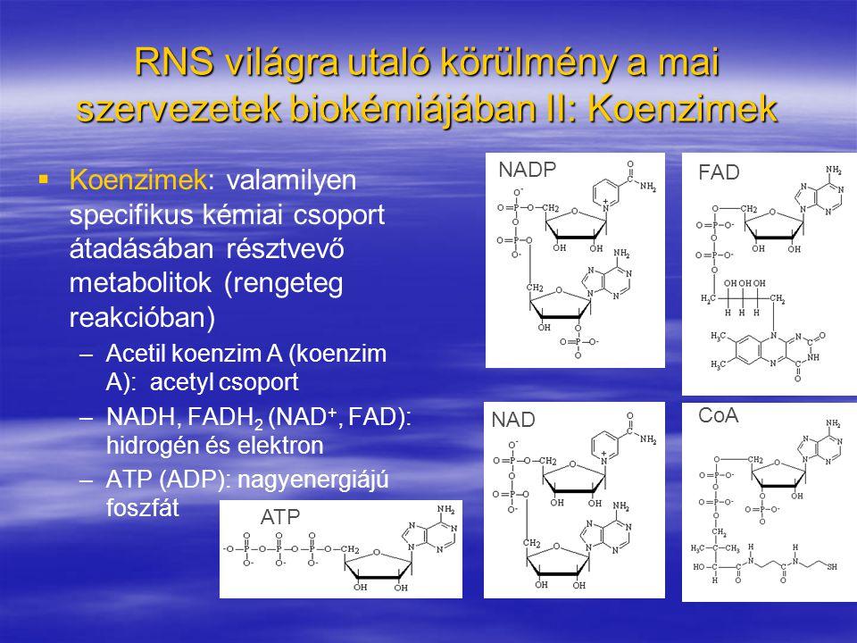 RNS világra utaló körülmény a mai szervezetek biokémiájában II: Koenzimek   Koenzimek: valamilyen specifikus kémiai csoport átadásában résztvevő met