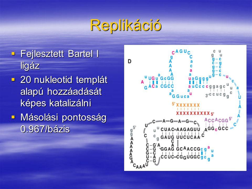 Replikáció  Fejlesztett Bartel I ligáz  20 nukleotid templát alapú hozzáadását képes katalizálni  Másolási pontosság 0.967/bázis