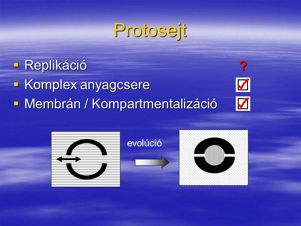 Protosejt  Replikáció  Komplex anyagcsere  Membrán / Kompartmentalizáció ? evolúció