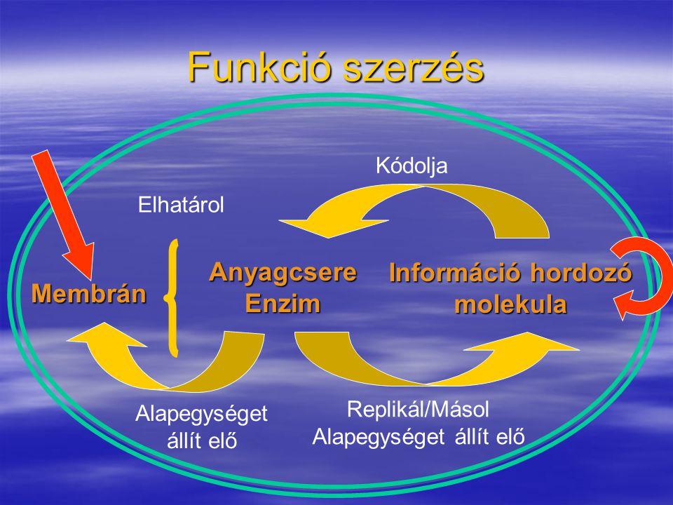 Funkció szerzés AnyagcsereEnzim Információ hordozó molekula Kódolja Replikál/Másol Alapegységet állít elő Membrán Alapegységet állít elő Elhatárol