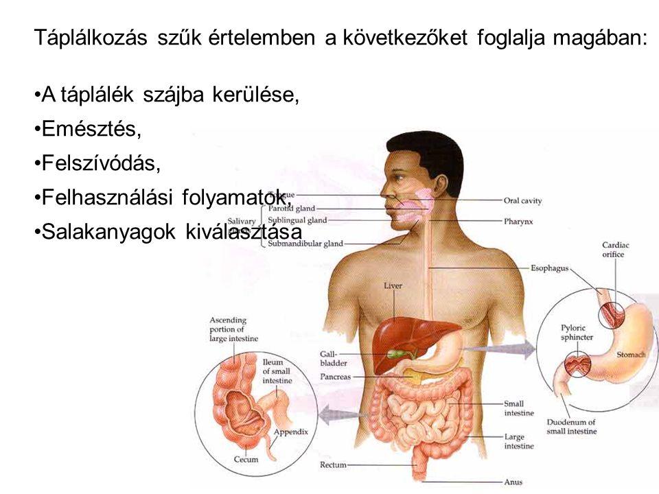 Táplálkozás szűk értelemben a következőket foglalja magában: A táplálék szájba kerülése, Emésztés, Felszívódás, Felhasználási folyamatok, Salakanyagok