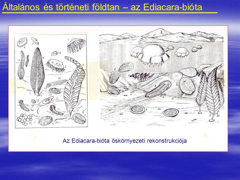 Általános és történeti földtan – az Ediacara-bióta Az Ediacara-bióta őskörnyezeti rekonstrukciója
