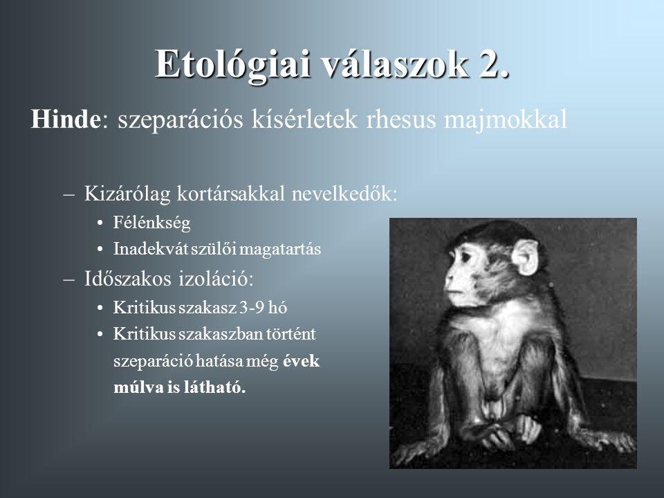 Etológiai válaszok 2. Hinde: szeparációs kísérletek rhesus majmokkal –Kizárólag kortársakkal nevelkedők: Félénkség Inadekvát szülői magatartás –Idősza