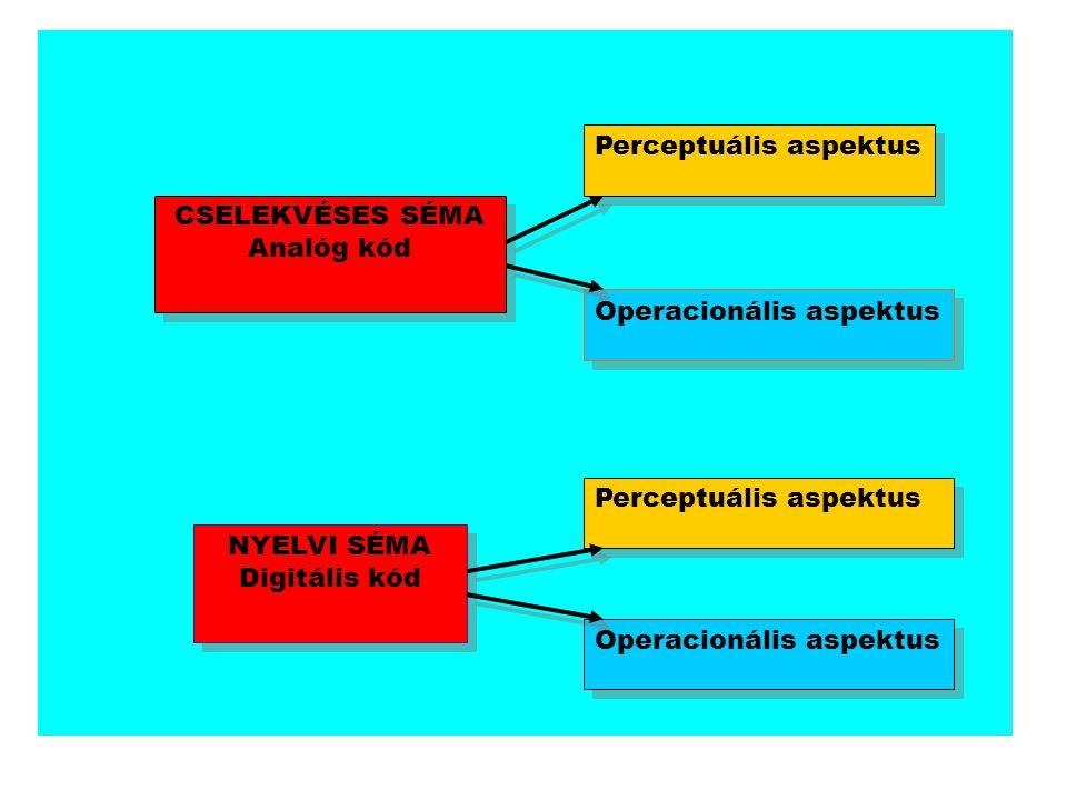 CSELEKVÉSES SÉMA Analóg kód CSELEKVÉSES SÉMA Analóg kód Perceptuális aspektus Operacionális aspektus NYELVI SÉMA Digitális kód NYELVI SÉMA Digitális k