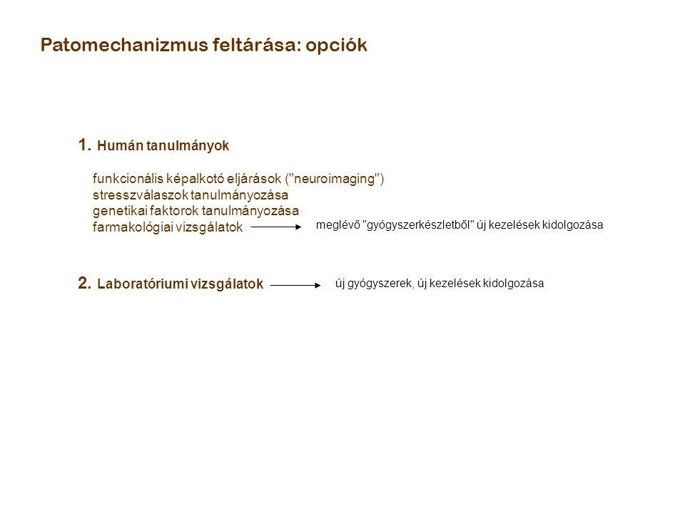 Patomechanizmus feltárása: opciók 1. Humán tanulmányok funkcionális képalkotó eljárások (