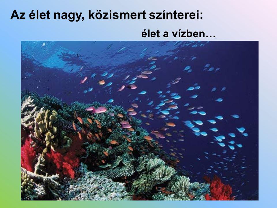 Az élet nagy, közismert színterei: élet a vízben…