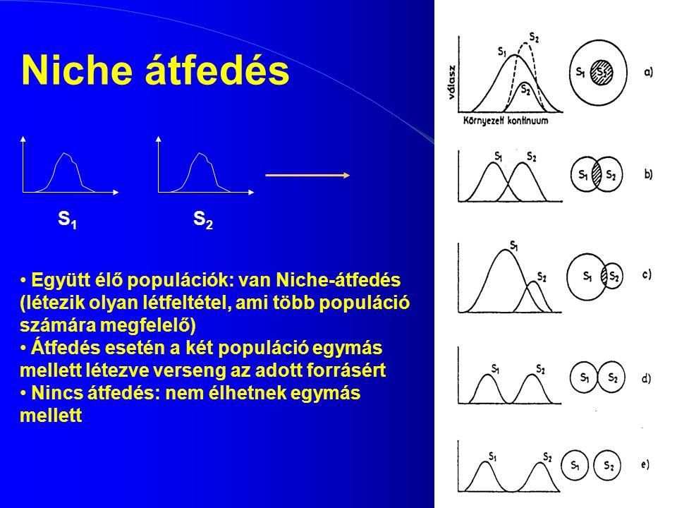 Niche átfedés S1S1 S2S2 Együtt élő populációk: van Niche-átfedés (létezik olyan létfeltétel, ami több populáció számára megfelelő) Átfedés esetén a ké