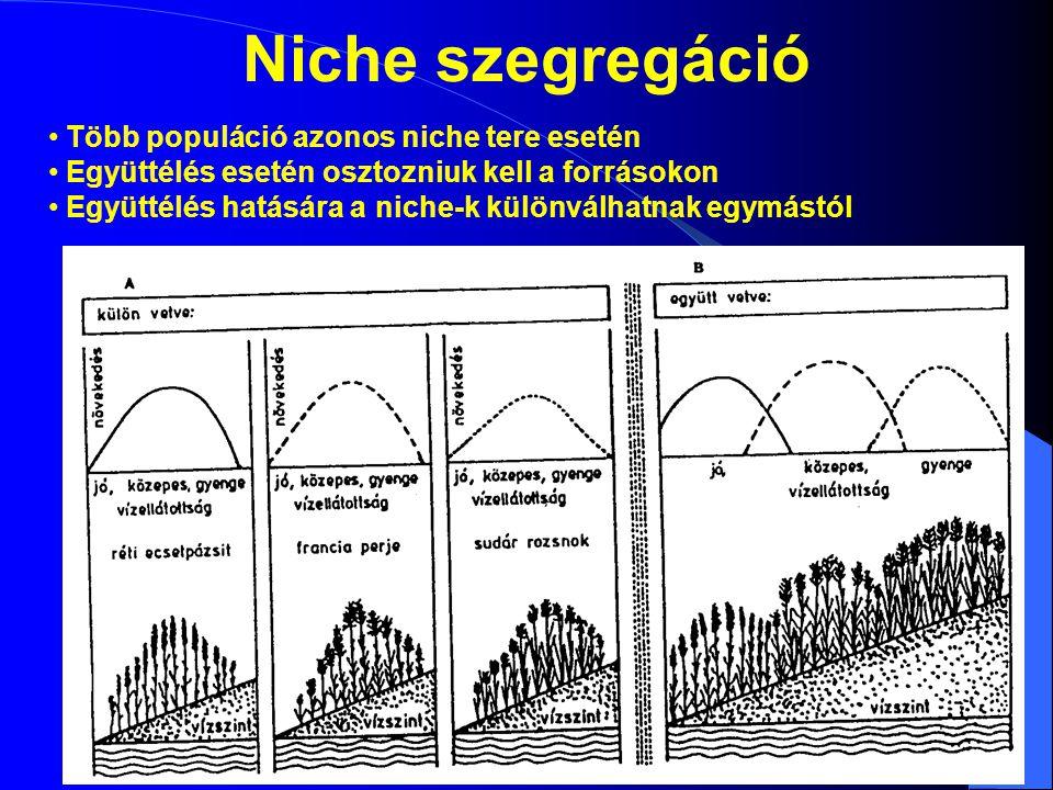 Niche szegregáció Több populáció azonos niche tere esetén Együttélés esetén osztozniuk kell a forrásokon Együttélés hatására a niche-k különválhatnak