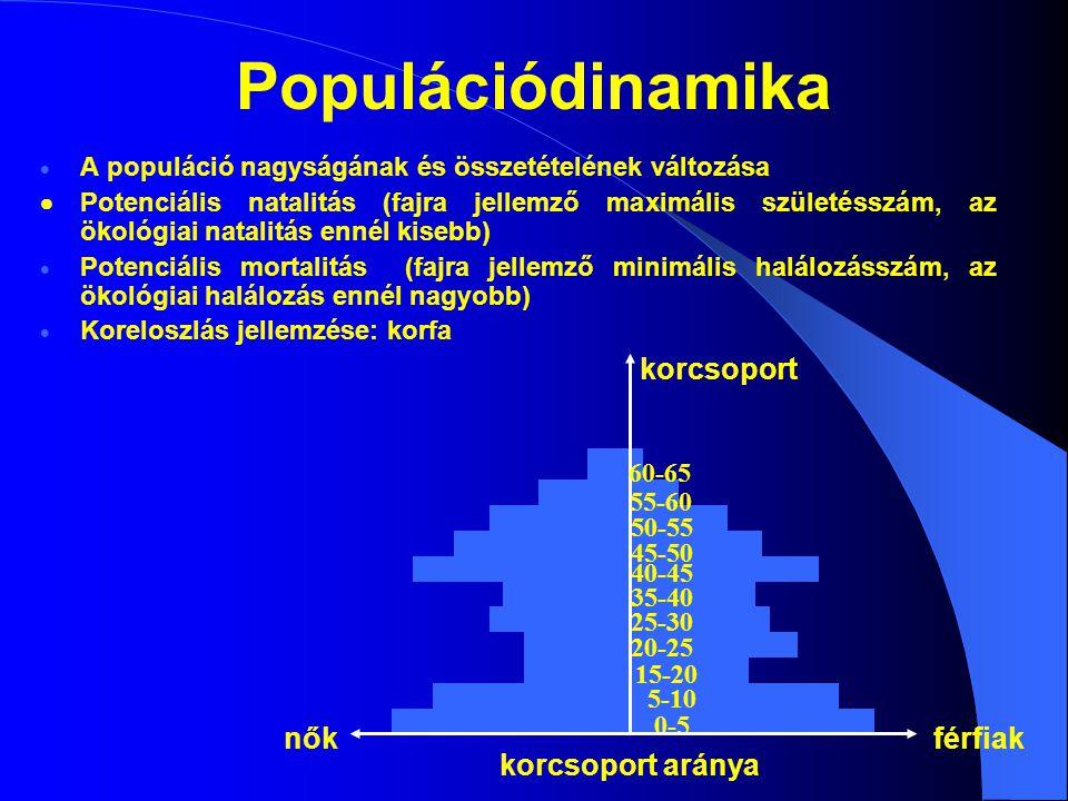 Populációdinamika  A populáció nagyságának és összetételének változása  Potenciális natalitás (fajra jellemző maximális születésszám, az ökológiai n